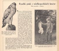 Jlustracja Polska 1935.12.01 R.8 Nr48.jpg